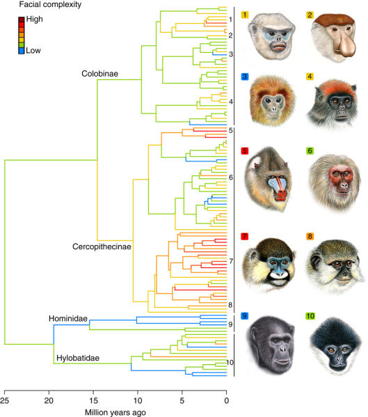 the role of primate sociality in Citation: swedell, l (2012) primate sociality and social systems  grooming  serves an important social function for most primates in addition to its hygienic.